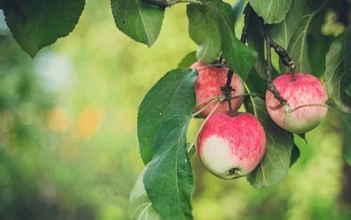 Better earning apple