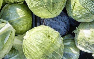 Smart cabbage